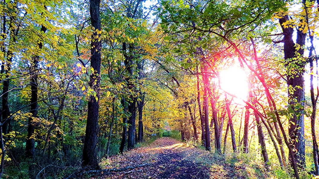 Wooded trail disappearing into the distance with sunset filtering through leaves
