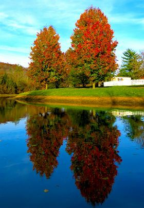 Two tall trees with leaves turning red are reflected in a lake